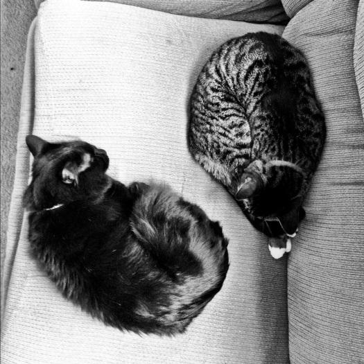 Bruce and Isabeau