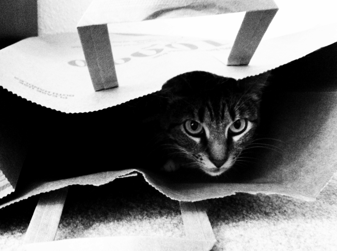 Beau in Bag